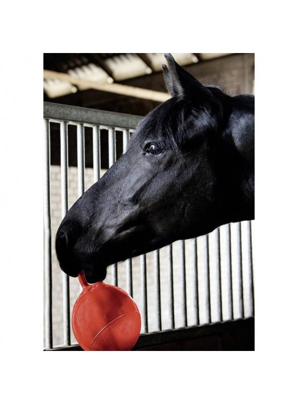 Piłka dla koni